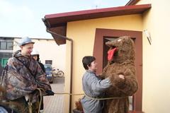 Galeria Wodzenie niedźwiedzia 2015